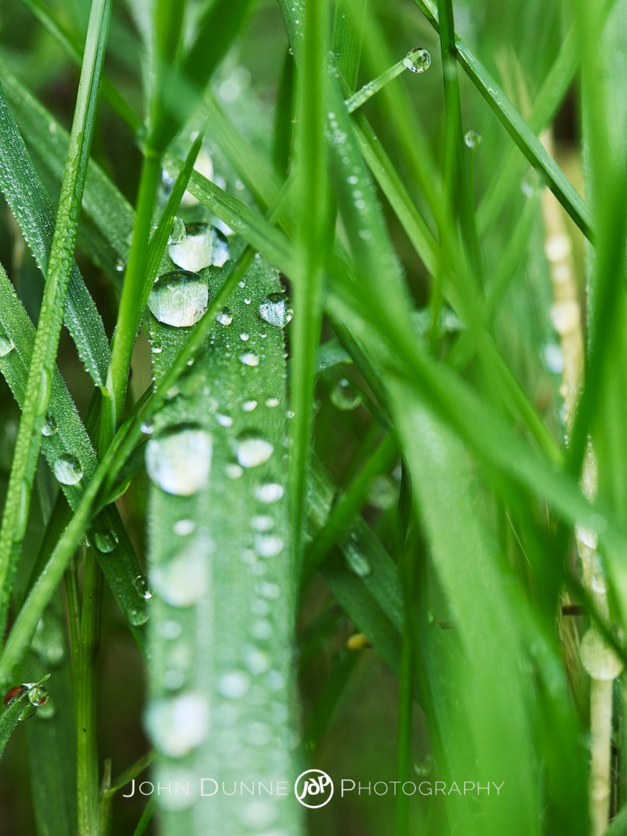 Dewdrops on Grass by John Dunne.