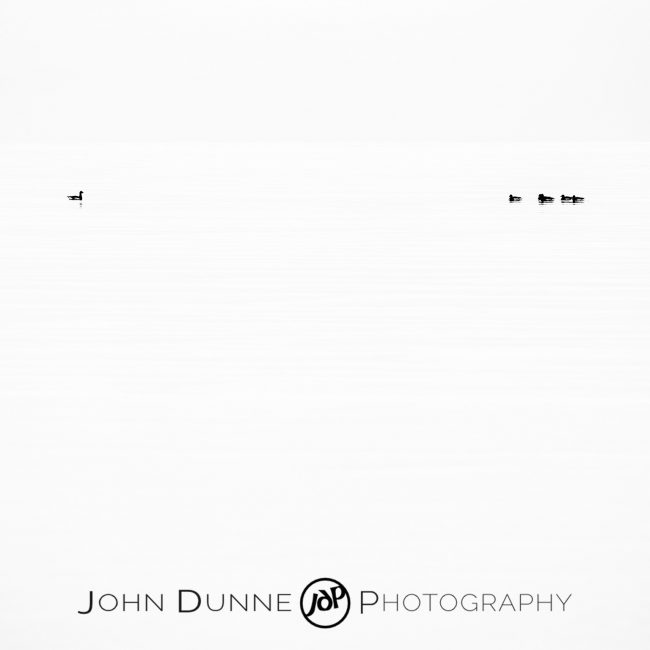 Ducks Upon the Sea by John Dunne.
