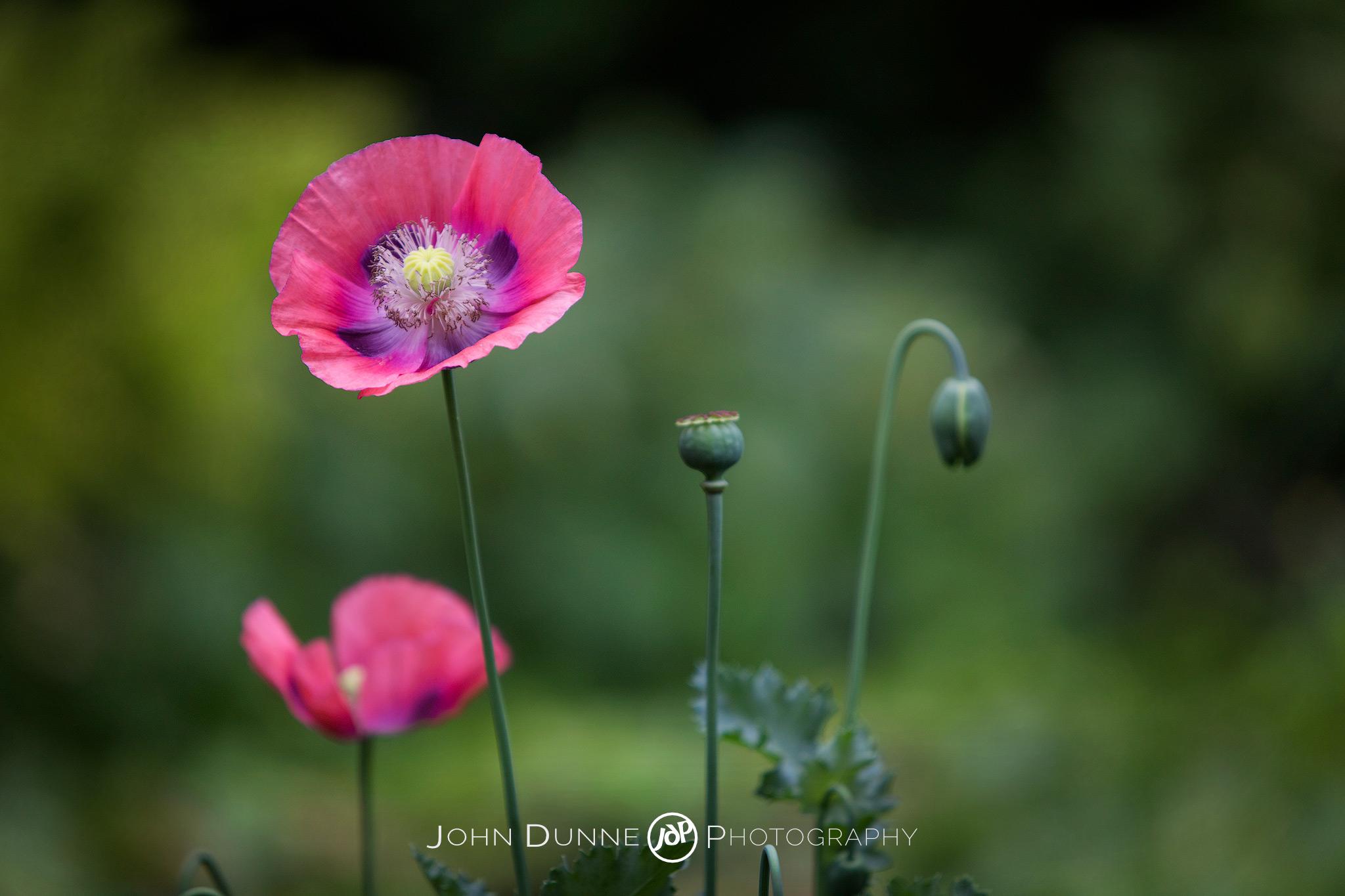 Flourish by John Dunne.