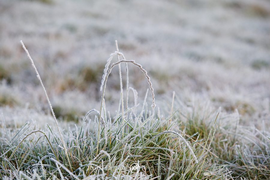 Frost Covered Grass by John Dunne.