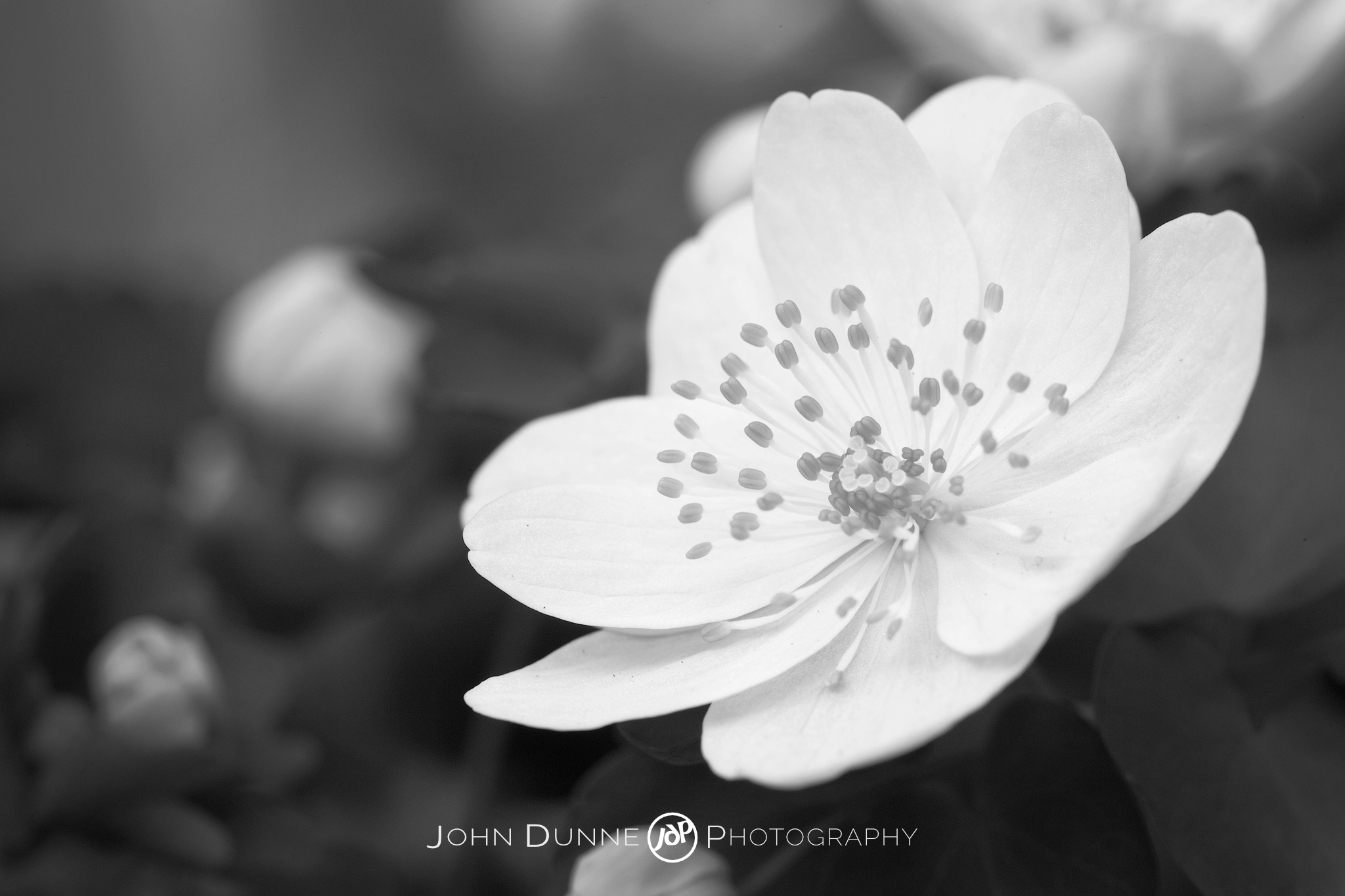 Perfect White by John Dunne 2009.