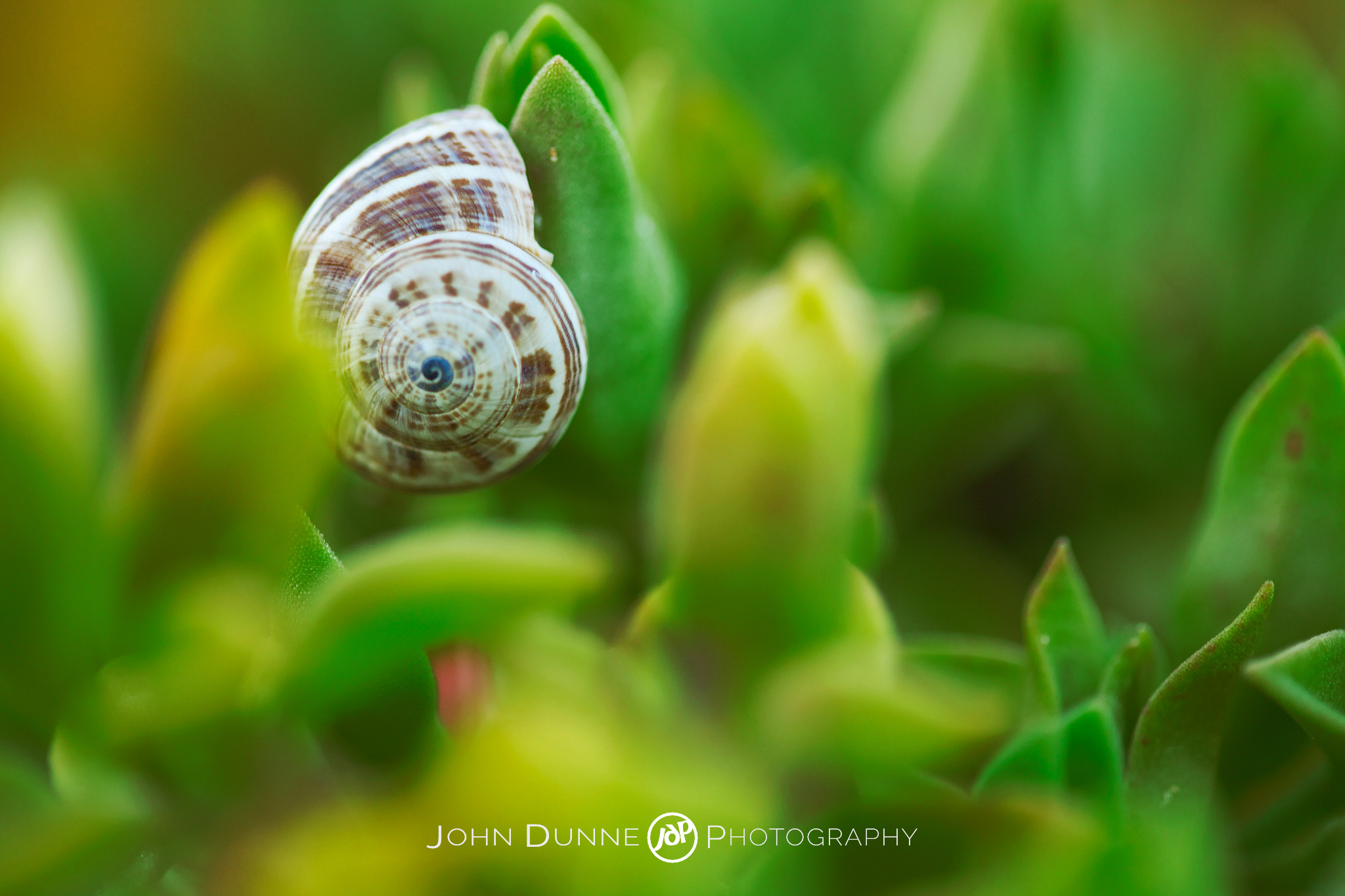 Shell We? by John Dunne 2009.