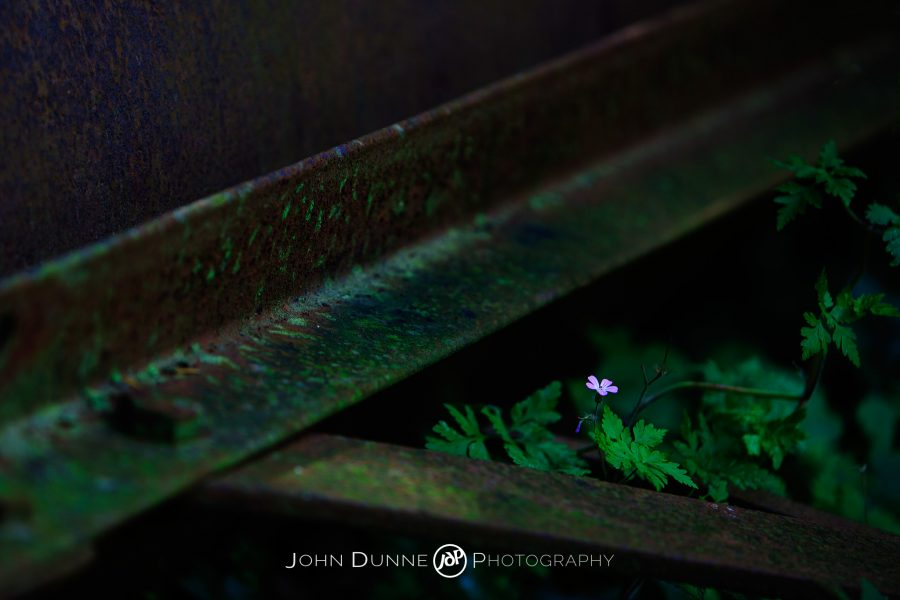 Solitary by John Dunne 2009.