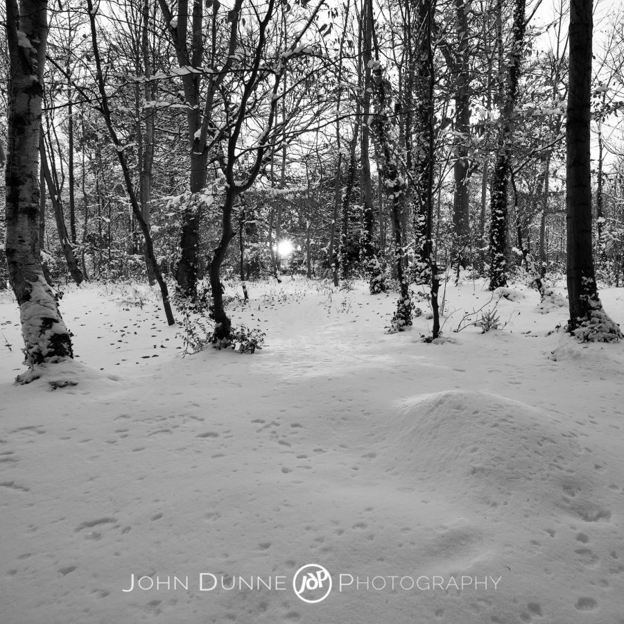 Sun-dappled Snow by John Dunne.
