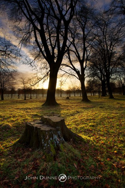 Sunrise in Phoenix Park by John Dunne.