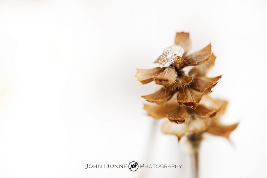 Thaw by © John Dunne 2010, all rights reserved.