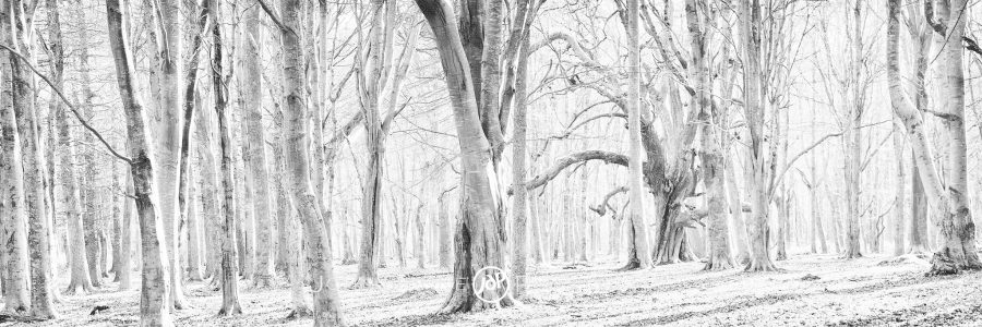 The Gnarled Oak in the Forest by John Dunne.