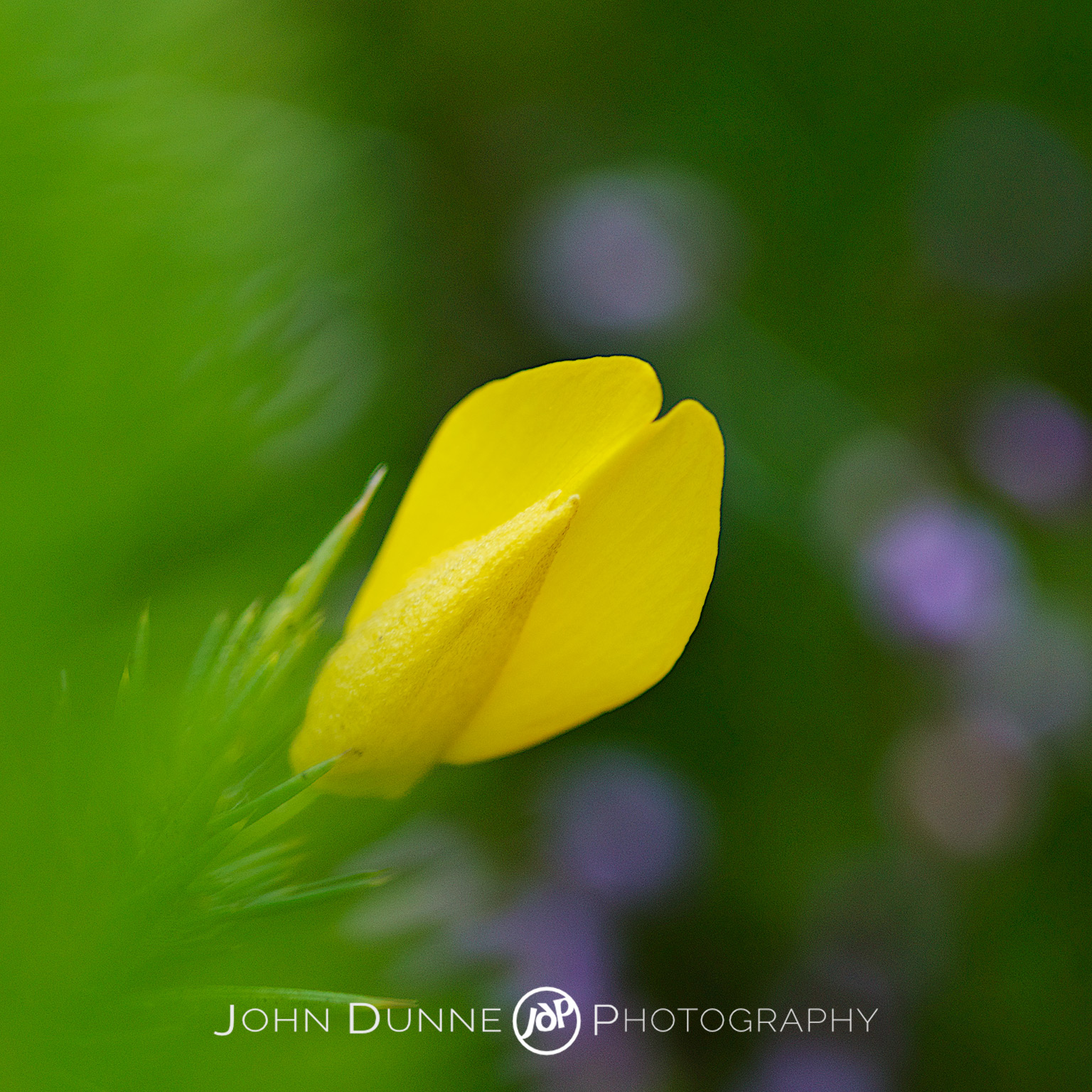 Yellow on Green by John Dunne.