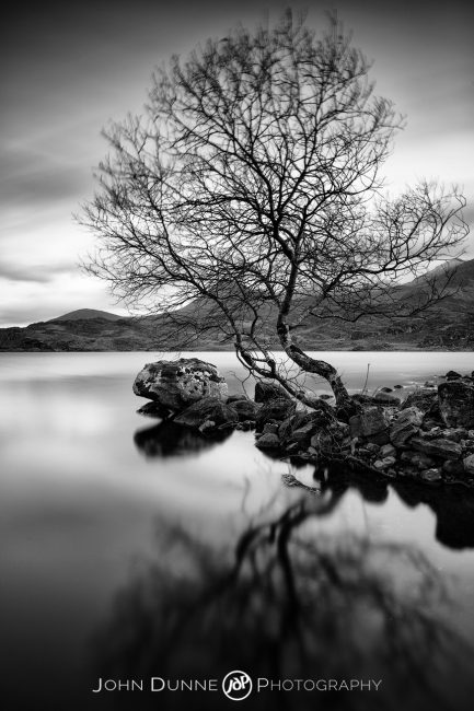 A Lone Tree on Lough Acoose #1 by © John Dunne 2016, all rights reserved.
